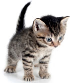 Bespoke website design services from Stripey Media leave you purring like a kitten