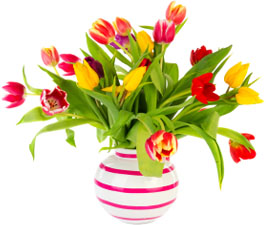 Lancashire website design from Stripey Media helps you blossom